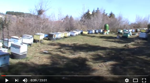 H ανάπτυξη των μελισσιών με μεταφορά θερμοκρασίας video