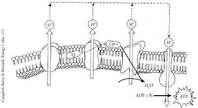 Tahapan-sistem-transportasi-elektron