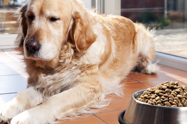 Ranking karm dla starszych psów