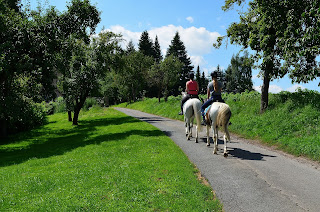 Two light coloured horses being hacked down a small road with trees and grass too each side
