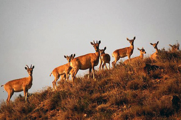 Deers in Golestan National Park.
