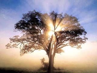 Πνευματική Ανάπτυξη & Πνευματική Καλλιέργεια στο Μπάκουα του φενγκ σούι