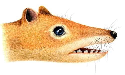 New symmetrodont mammal found from the Early Cretaceous of China