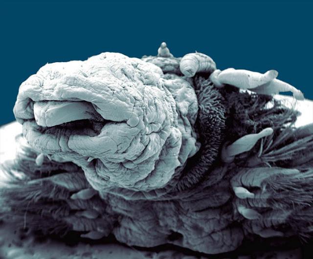 كعالم آخر مستقلٍ بذاته تحت الميكروسكوب PHILIPPE-CRASSOUS1.jpg