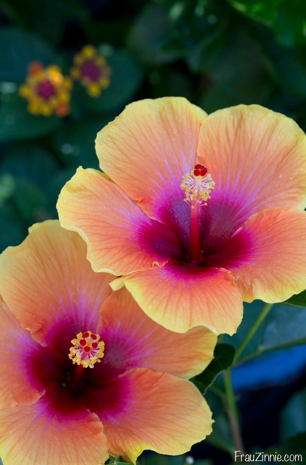 Floral Friday: Bright colors