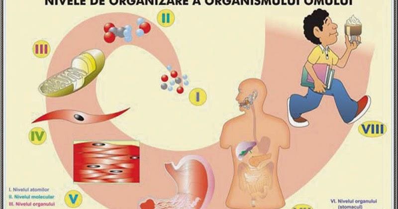 organizarea corpului
