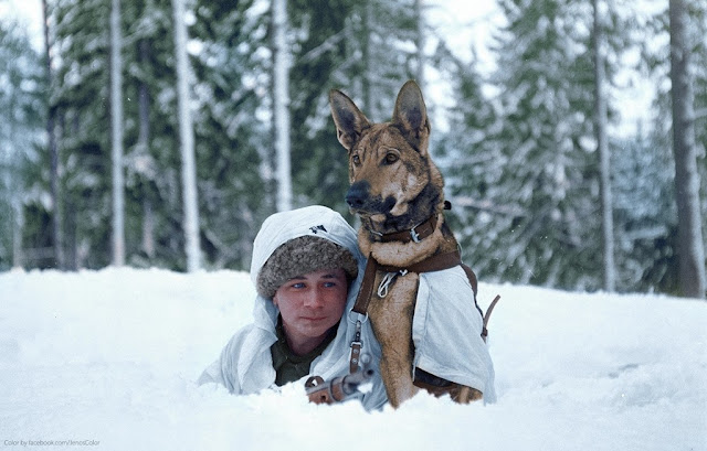 24 November 1939 worldwartwo.filminspector.com Finland soldier dog