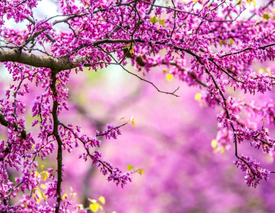 Spring Flowers Hd Wallpapers Purple Flowers Hd Pictures DonT