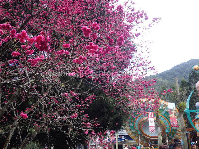 Formosan Aboriginal Culture Village cherry blossom