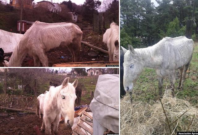 Los animales cuyo mal estado han causado la condena al vecino de Barakaldo