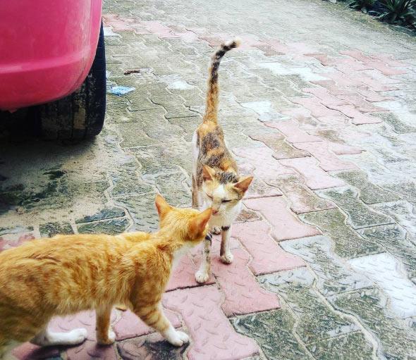 Cossy Orjiakor Names Her Cats Buhari And Goodluck