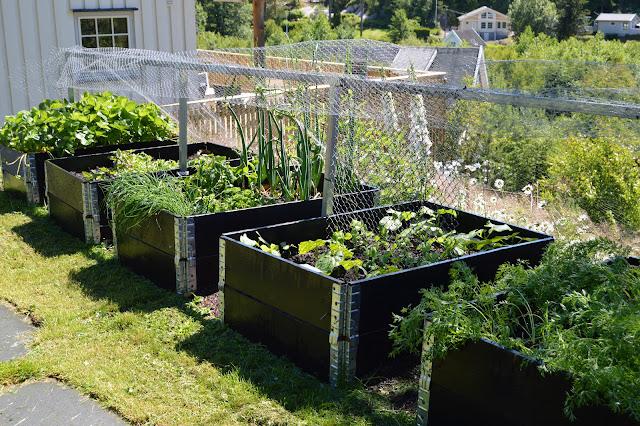 Pallekarmer med urter og grønnsaker - Hyttehagen