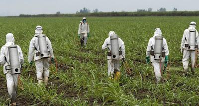 Πενταετής άδεια από την κυβέρνηση στο ζιζανιοκτόνο Roundup