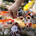 Panduan Lengkap Cara Mudah dan Praktis Budidaya Ikan Hias Air Tawar