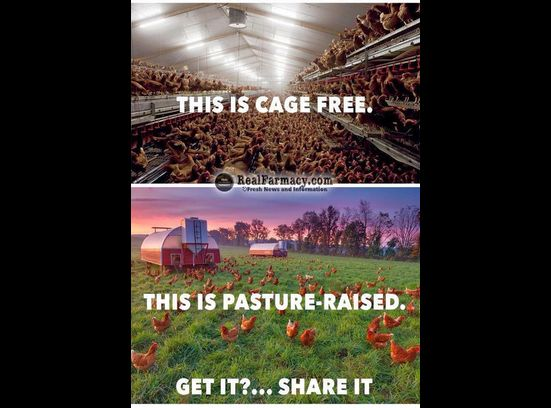 Cage-free vs pasture raised