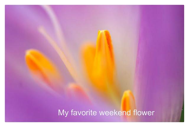Colchium Flower Macro by Hetty