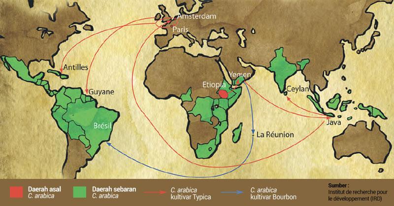 Rasa Kopi arabica yang telah Penyeberan Biji Kopi Arabika