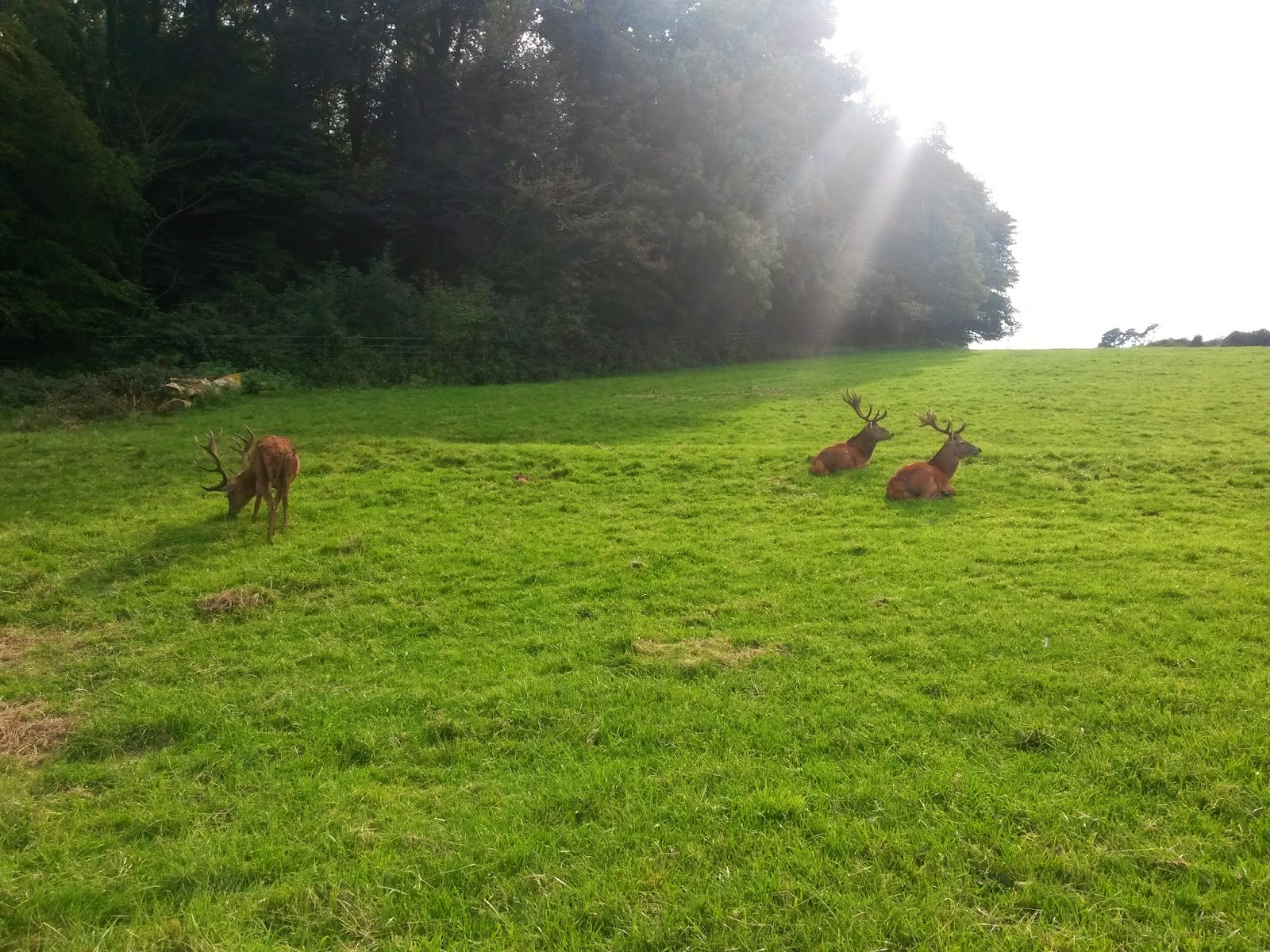 Red Deer Park, Ashton Court