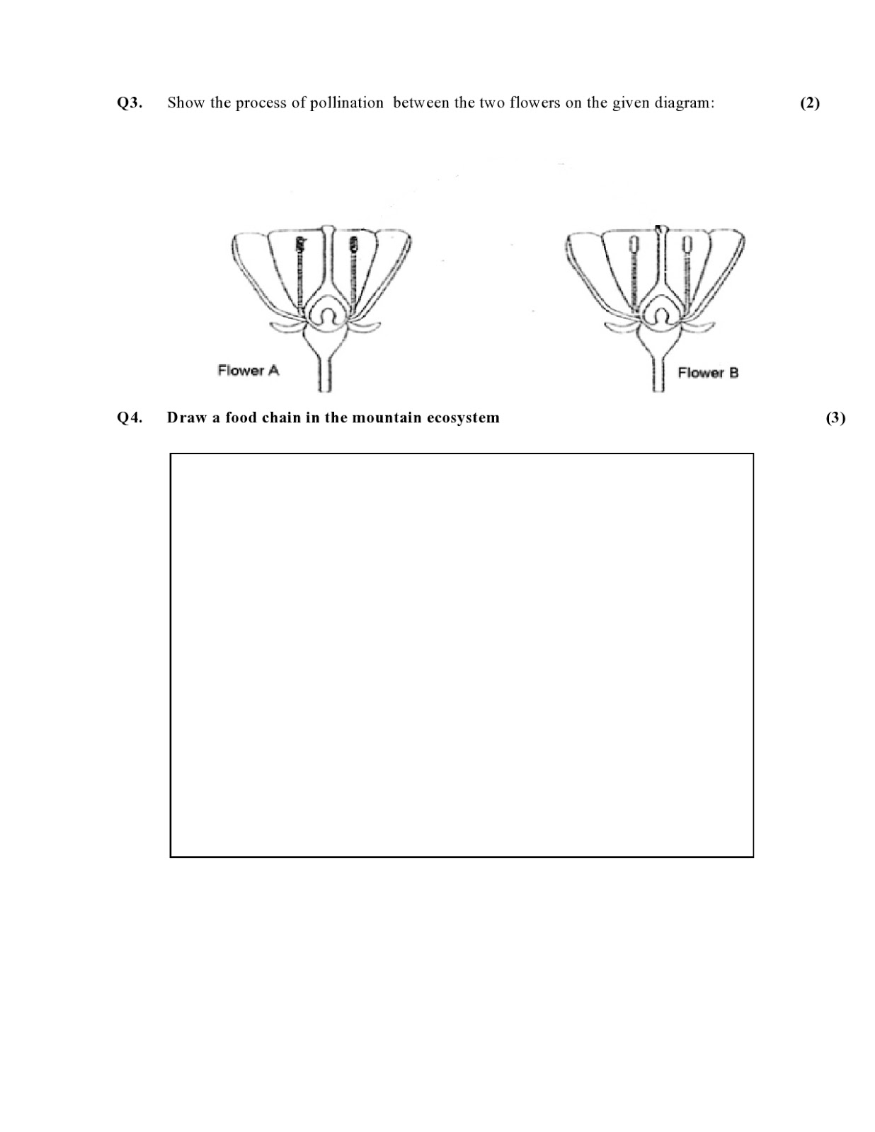 Birla World School Oman Revision Worksheets For Grade 5 B