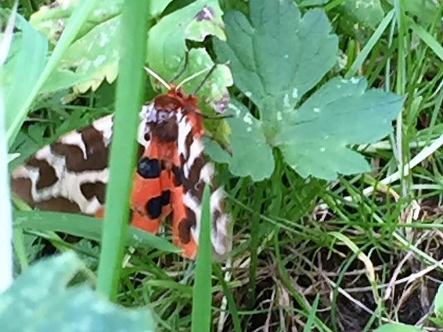 Schmetterling oder Falter?