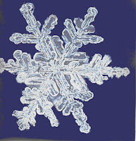 Resultat d'imatges de floc de neu