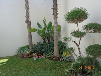 Tukang Taman Banjarmasin, Banjarbaru, Martapura - 081250107742