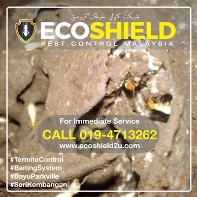 Termite Control Seri Kembangan Pest Control Selangor