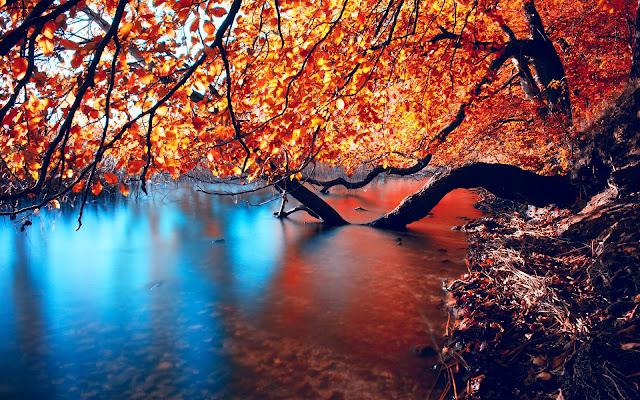 Foto met boom bij rivier in de herfst