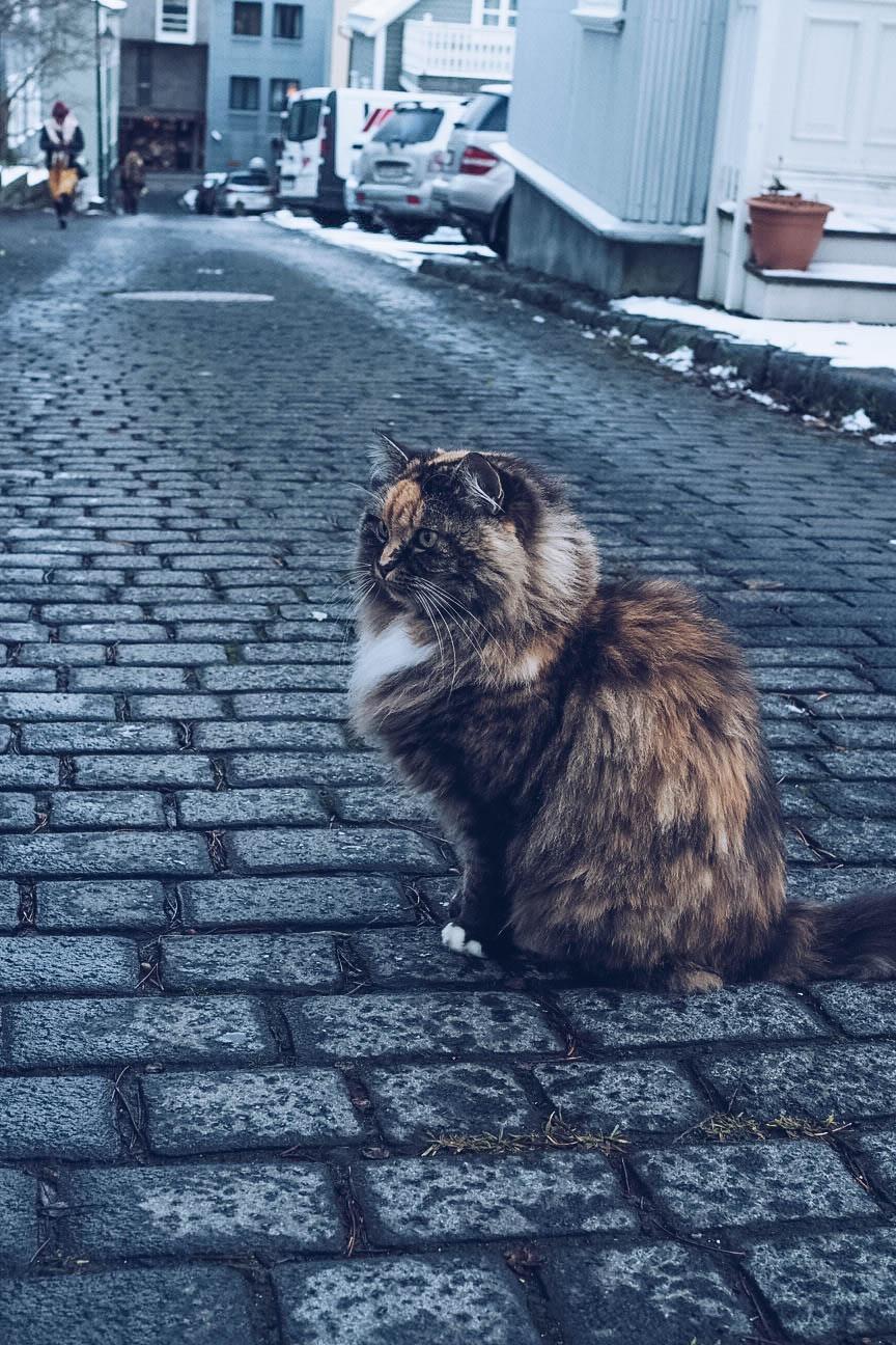 Cats of Reykjavik