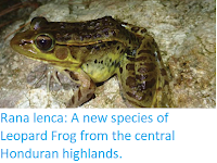 http://sciencythoughts.blogspot.co.uk/2018/03/rana-lenca-new-species-of-leopard-frog.html