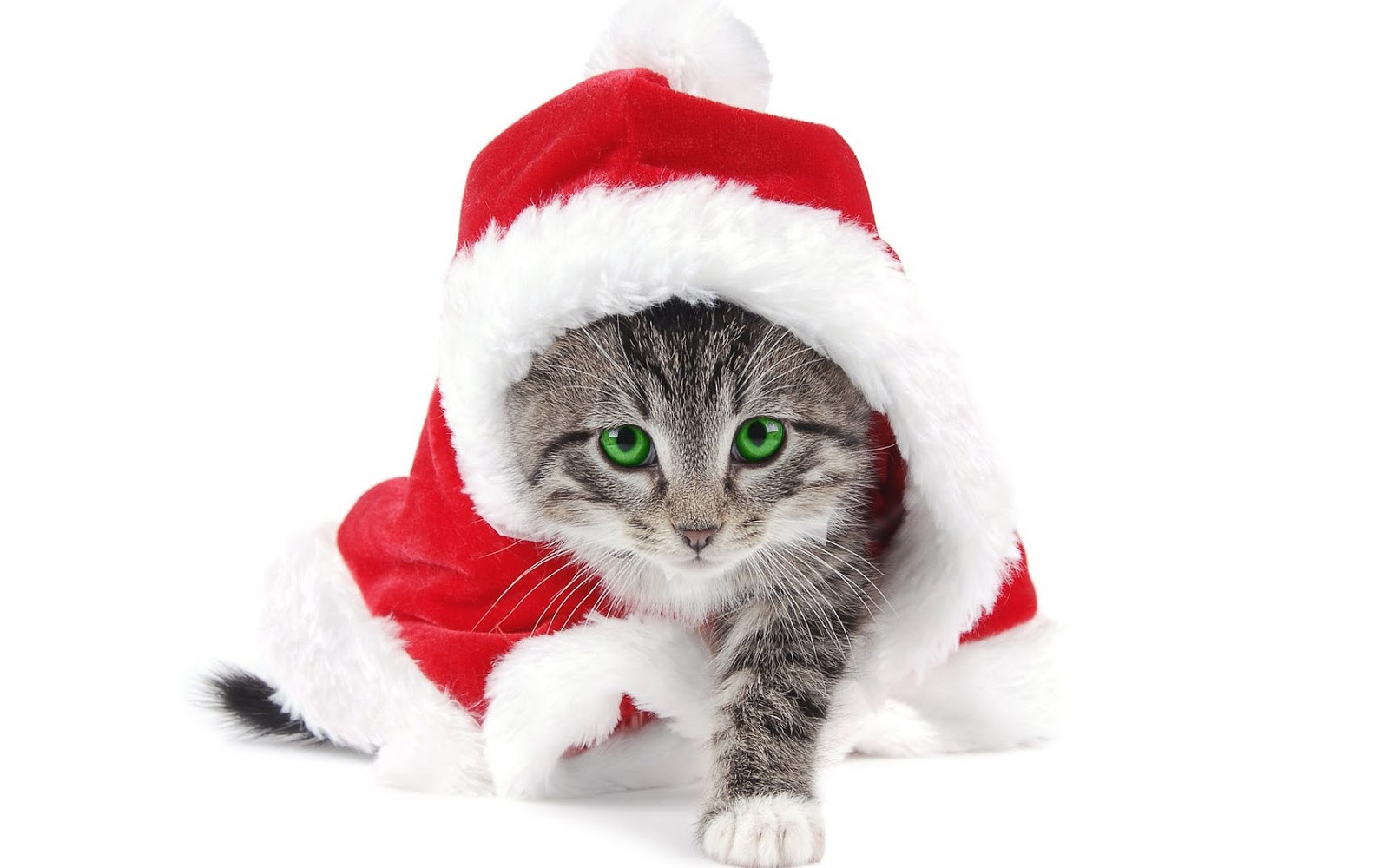 Cat wearing a big christmas hat   HD Animals Wallpapers