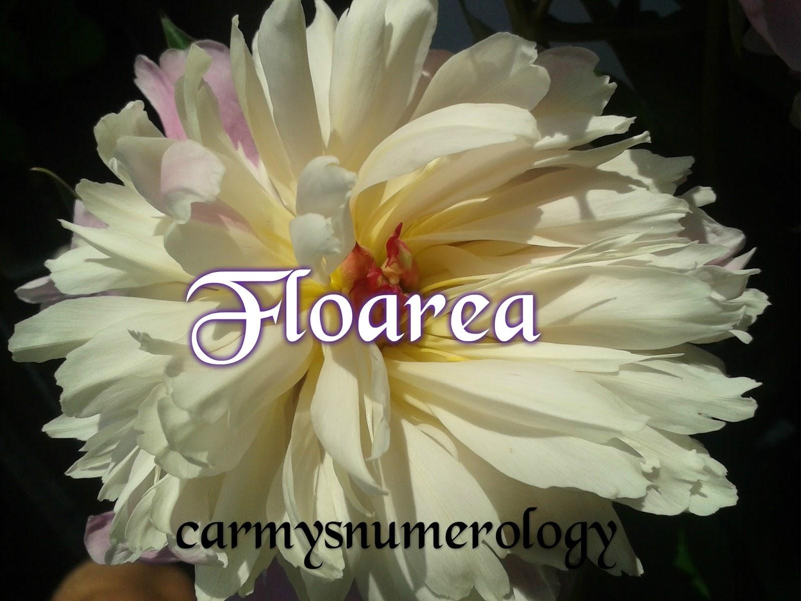 Carmys Numerology Floarea Regina Florilor