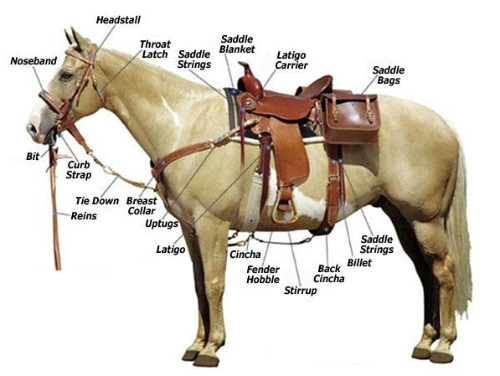 Horse-Care-Accessories