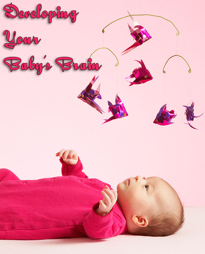 Developing Your Baby's Brain
