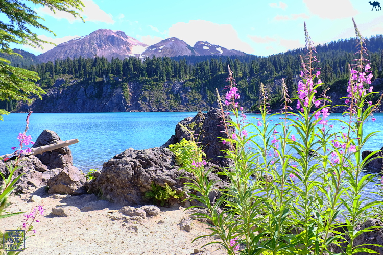Le Chameau Bleu - Garibaldi Provincial Park - Colombie Britannique