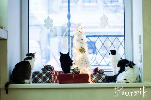 очень любят кошки сидеть на окошке и наблюдать