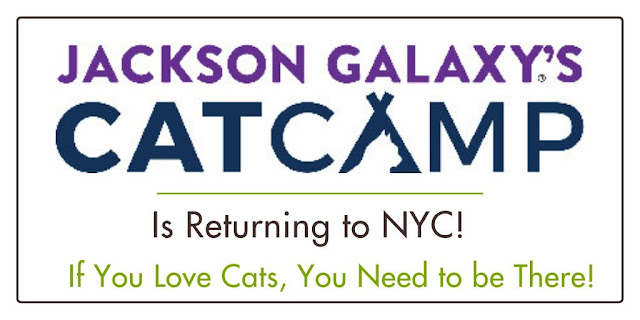 Jackson Galaxay's Cat Camp|NYC