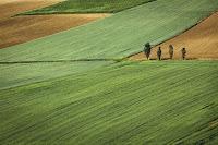 usaha kavling tanah, bisnis kavling, usaha kavling, kavling tanah, kapling tanah, usaha kapling tanah, tips jualan tanah