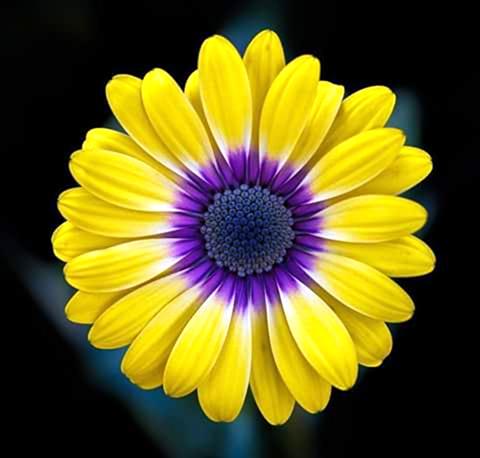 Flores e Cores, Natureza