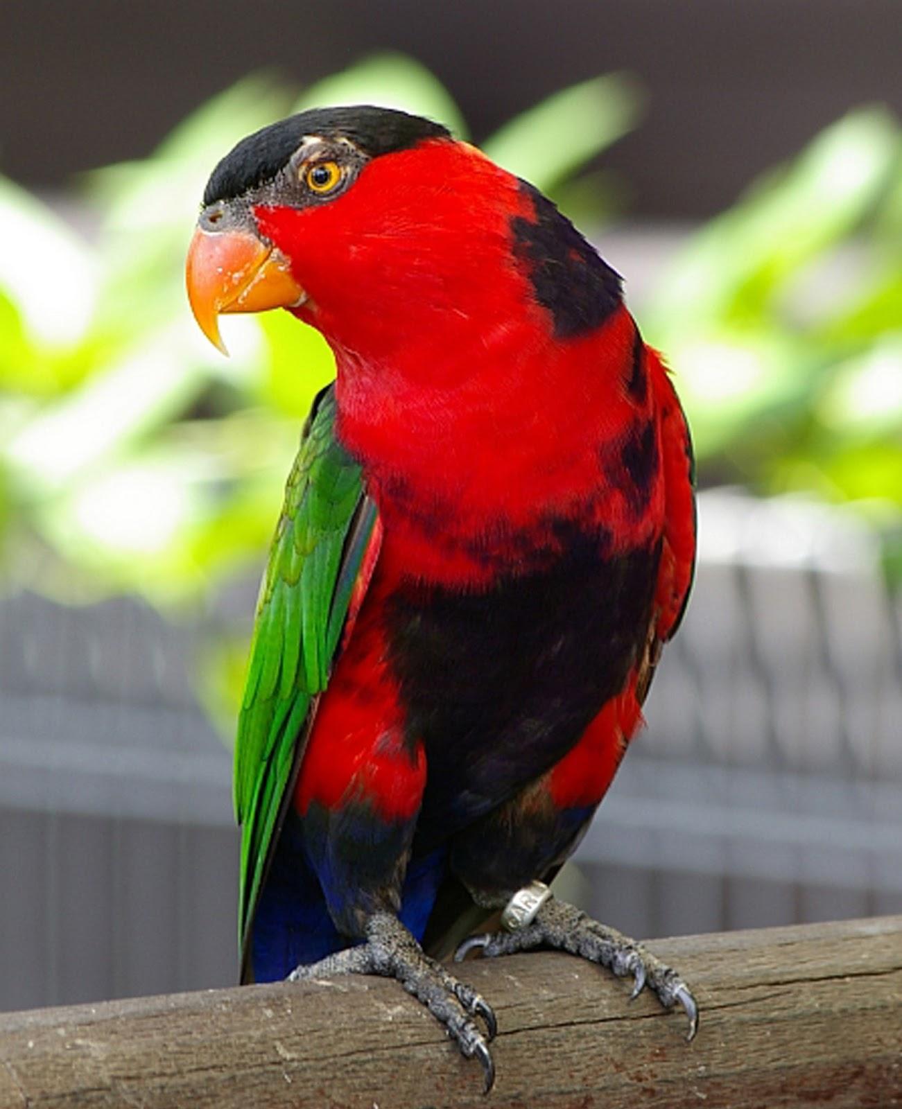 Burung  Rupa Rupa Burung