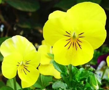 Fotos de flores amarillas hermosas