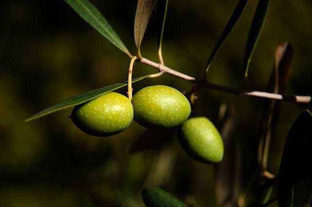 Wörterliste Olive, Worte die Olive beinhalten, Dinge mit Olive