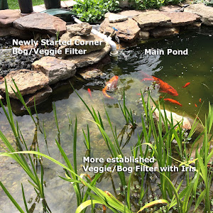 Pond veggie bog plant bio filters aka wetlands filter for Best koi pond filter system