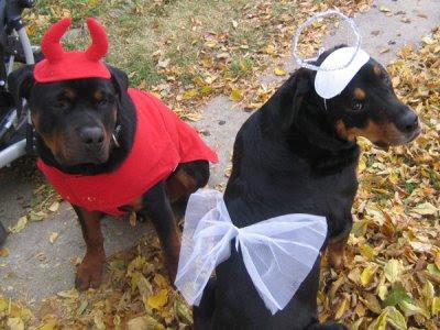 Rottweiler dog halloween