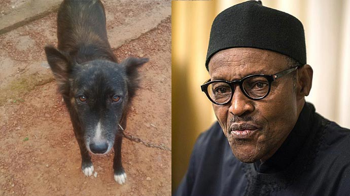 Joe Chinakwe, trader who named his dog Buhari, gets released after meeting bail conditions