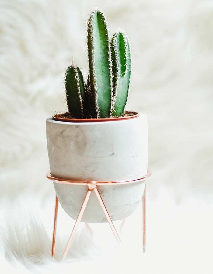 Cacto em cachepot de cerâmica e suporte rose gold. A decoração ganha um novo ar com a utilziação de cactos em vasinhos bonitos.