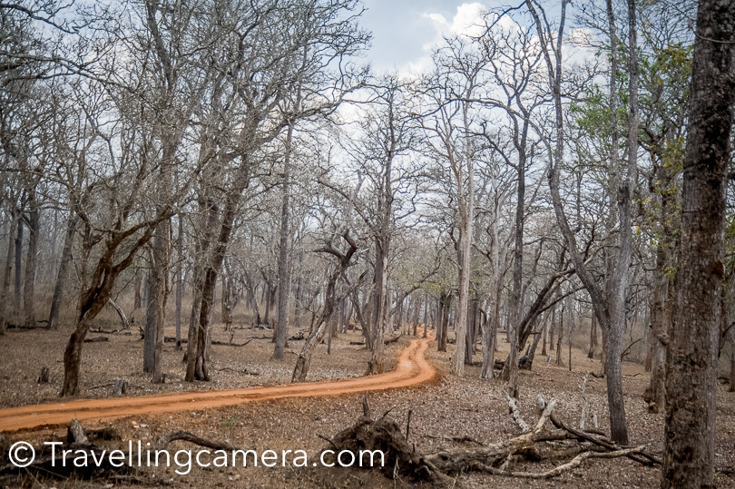 Kabini forest is very beautiful, so it's not only about Tigers, Leopards, Elephants, Deers or birds but much beyond that. These muddy roads look amazing in these forests. This forest is also surrounded by Kabini river. Sighting of Asiatic elephants is very popular in Kabini Tiger reserve.