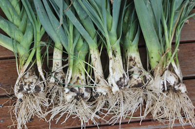multiplier leeks