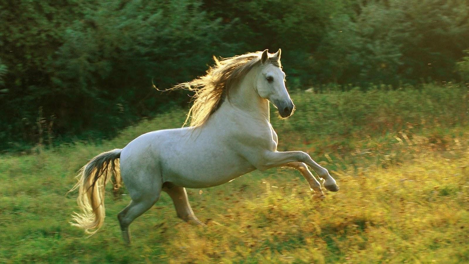 Popular   Wallpaper Horse Epic - MixoPlanet+%2812%29  Image_604334.jpg