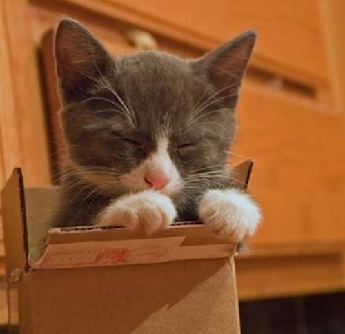 15 cute cats in boxes amazing creatures. Black Bedroom Furniture Sets. Home Design Ideas